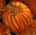 Fall - Harvest