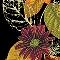 Autumn Splendor - Closeout
