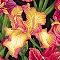 Botanicals III - Closeout