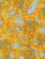 TT-Nature-C1139-Gold