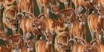 Stoney Brook Packed Deer